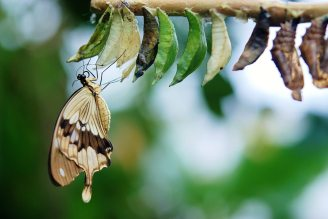 butterfly-close-up-cocoons-63643