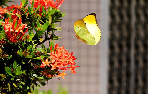 butterfly-colorful-colourful-37081